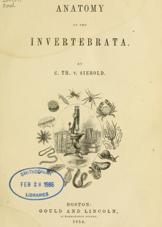Anatomy of the invertebrata